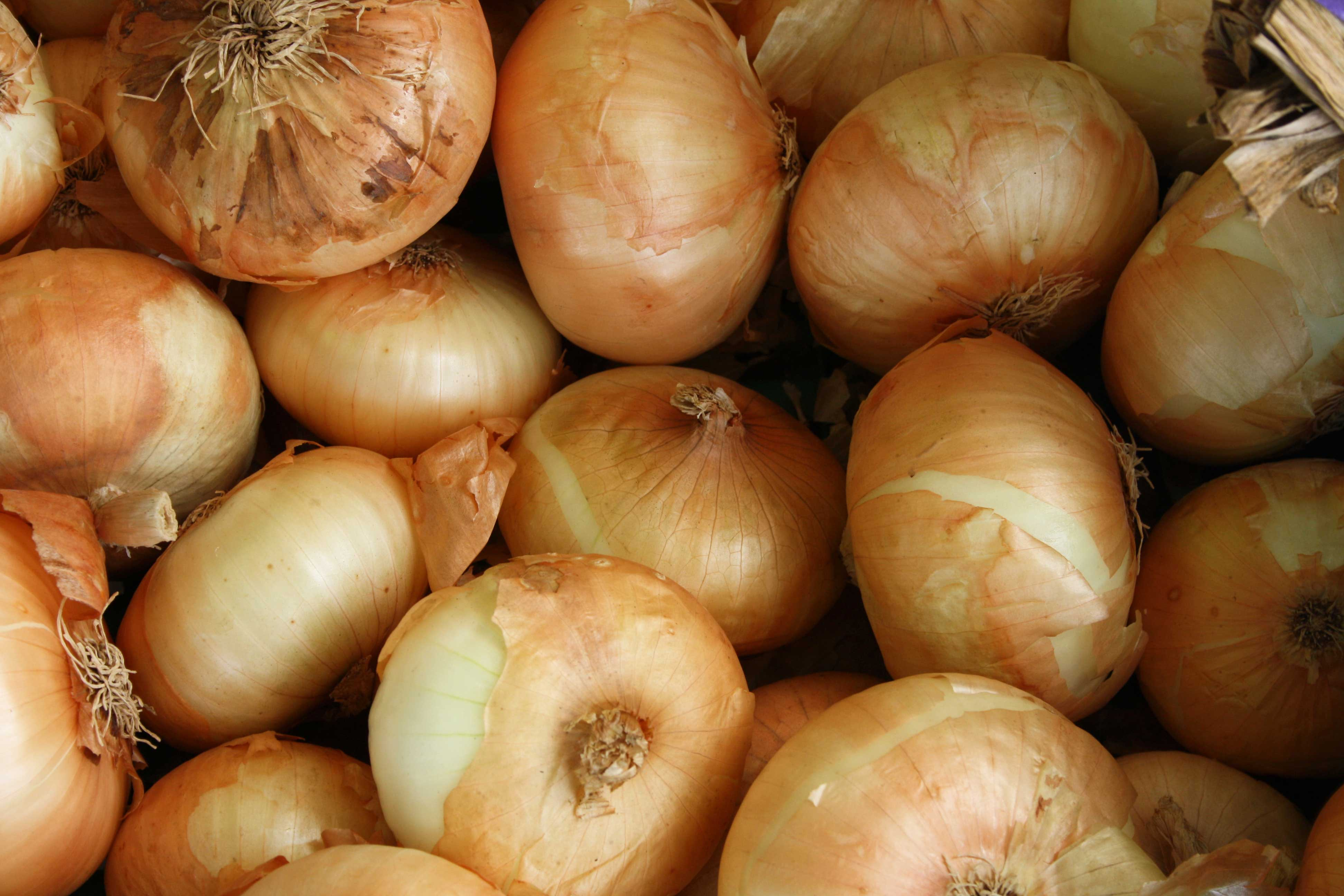 healthy onions
